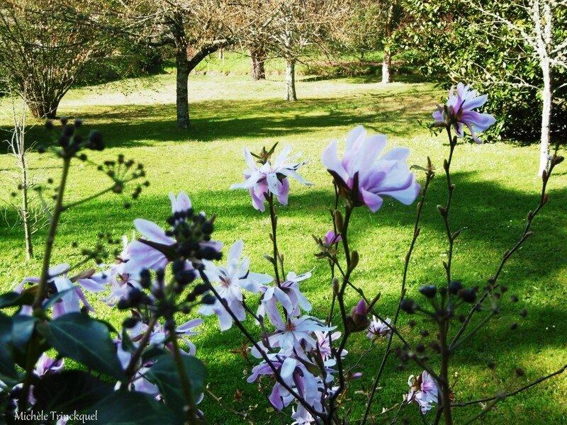 1-Arbres fleuris et fleurs de Léon 1903171