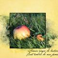 Pommes rouges de l'automne