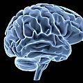 <b>Crohn</b> : De l'intestin au cerveau, une <b>maladie</b> multi-systémique