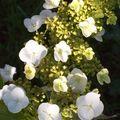 Détail d'un nouveau : 1ere floraison