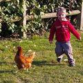 2008 02 meo poules