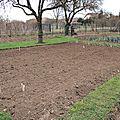 Premières plantations ......