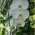 orchid7