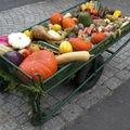 Brouette de légumes suite...