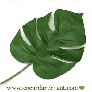 feuille-de-phylodendron-monstera www.coeurdartichaut.com