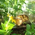 Butterflies, the end