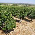 Aux quatre coins de la vallée de l'Hérault