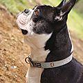 Mon chien Hiety
