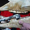 Présentation dentisterie15