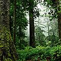 L'huile essentielle de <b>pin</b> sylvestre, comme une balade en forêt...