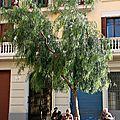 Barcelone - Mont-Juic, vieux_6173