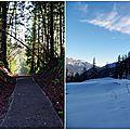 Cougar Mountain Stevens Pass