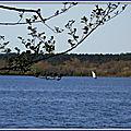 Lac Soustons 1204155