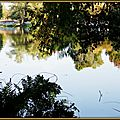 Lac Soustons Pointe des Vergnes 2