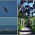 The Presidio of San Francisco
