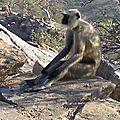 - des primaires pour les primates