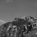Vidéo: vendanges 1968 sur château chalon