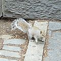 DAY 1 - Le 1er écureuil
