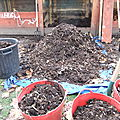 v) La distribution du compost mûr.