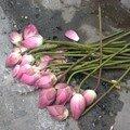 Fleurs fânées