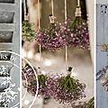 Lavandes & fleurs sechees