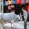 Pas d'Inde sans vache!