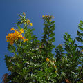 Flore de Malte