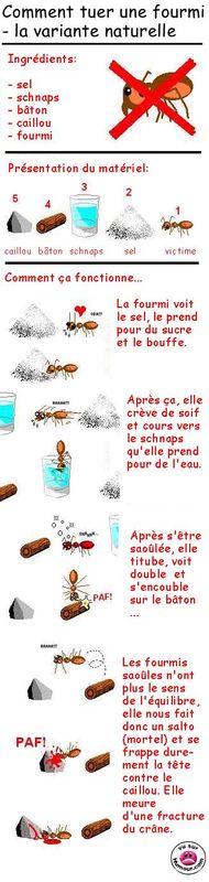 Comment tuer une fourmi