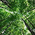 Το δασος απειλειται: περιβαλλοντικο προγραμμα 2ου γυμνασίου αγ. αναργύρων 2016=17