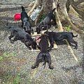 Cuddly, happy, girly, speedy et réglisse .... 5 chiots très maigres jetés dans la canne