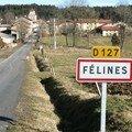 Félines (43)