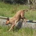 2008 10 15 Cachuète qui sort du bassin aprés avoir pris son bain