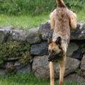2009 05 01 Kapy qui saute du mur