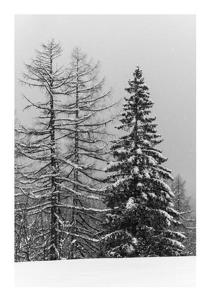 Le silence de la neige © Tous droits réservés.