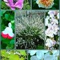 Des fleurs au jardin ...