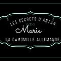 Marie la vendéenne nous parle de la camomille allemande (chamaemelum nobile)