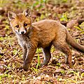 2014-05-30 LUX-0919
