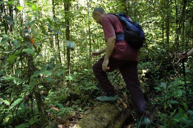 Un explorateur en action