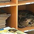 Insolite: un chat embauché comme assistant bibliothécaire en russie