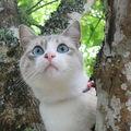 mon chat CALI