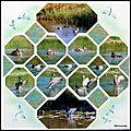 Le marquenterre 2011 - les canards