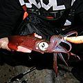 Sortie eging a la recherche des calamars
