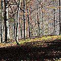 Plateau de jeunes hêtres près des Arrigaux...