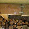 Toiles d'araignée sous le toit du bûcher