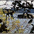 Cabane de chasse Etang blanc