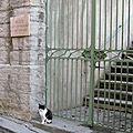 Le chat du musée de nyons