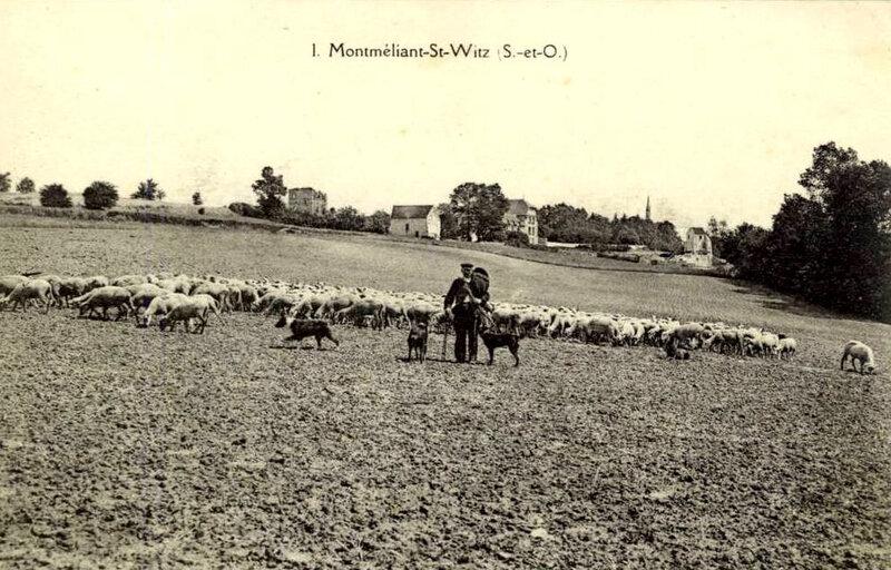 Montmélian_panorama_avec_berger_et_troupeau