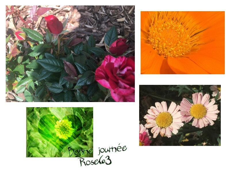 Bonne journée Rose63