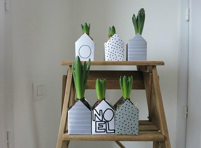 lundi de l 39 avent 1 les jacinthes lulu les p 39 tits pois. Black Bedroom Furniture Sets. Home Design Ideas