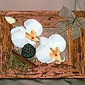 cadre orchidée 01 (2)